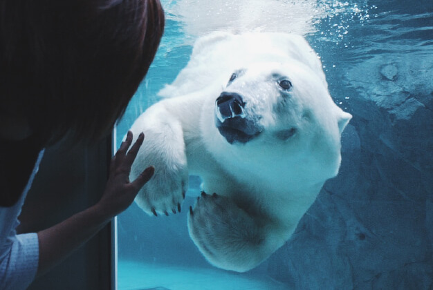 Asahiyama Zoo Be inspired by the wildlife